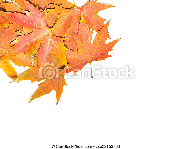 autumn leaves on a white background - csp22153780