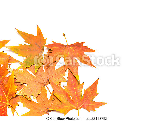 autumn leaves on a white background - csp22153782