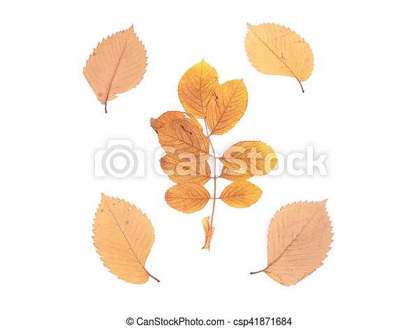 autumn leaves on a white background - csp41871684