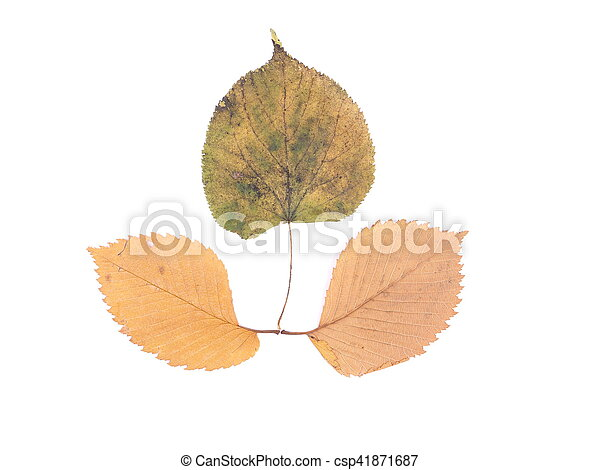 autumn leaves on a white background - csp41871687