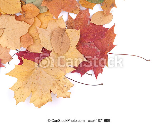 autumn leaves on a white background - csp41871689