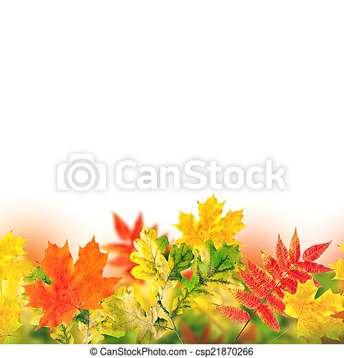 Autumn leaves on a white background - csp21870266