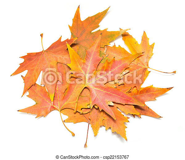 autumn leaves on a white background - csp22153767