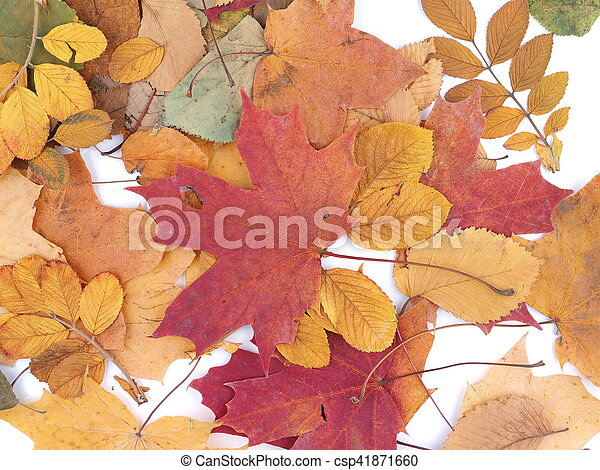 autumn leaves on a white background - csp41871660