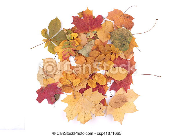 autumn leaves on a white background - csp41871665