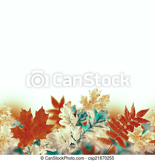 Autumn leaves on a white background - csp21870255