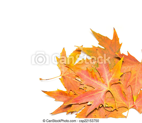 autumn leaves on a white background - csp22153750