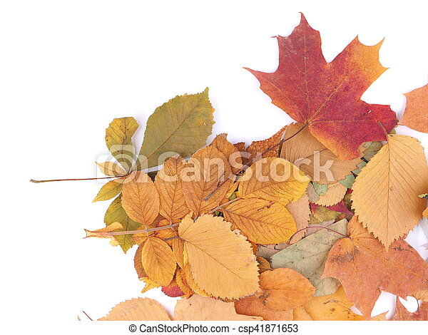 autumn leaves on a white background - csp41871653