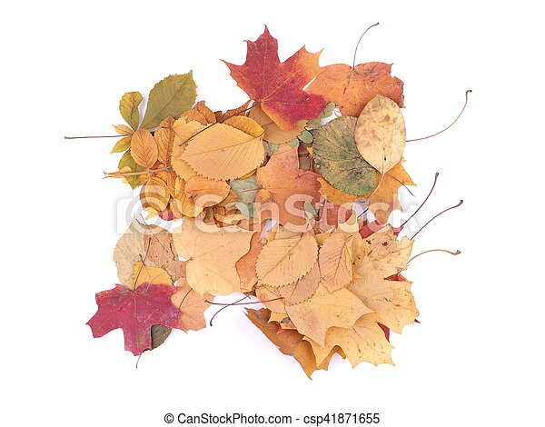 autumn leaves on a white background - csp41871655