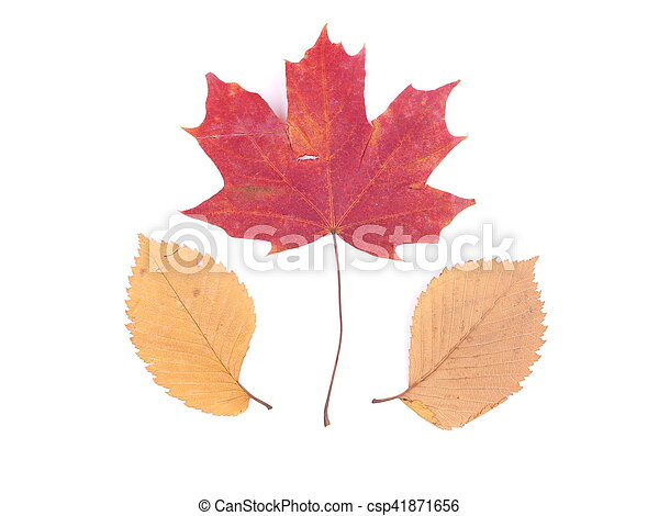 autumn leaves on a white background - csp41871656