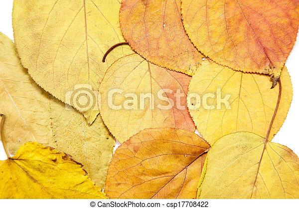 autumn leaves on a white background - csp17708422