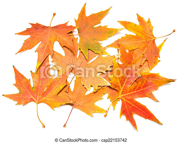 autumn leaves on a white background - csp22153742