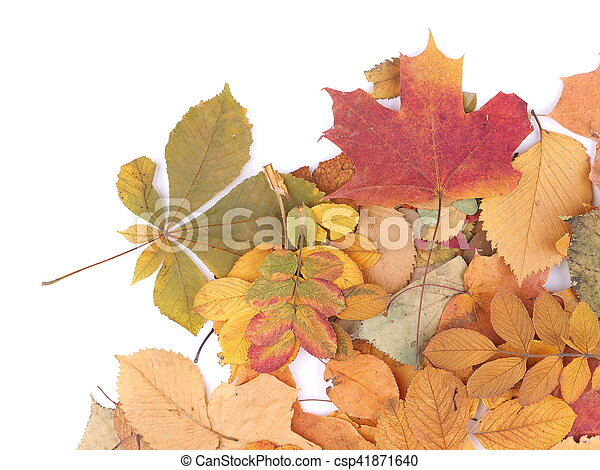 autumn leaves on a white background - csp41871640