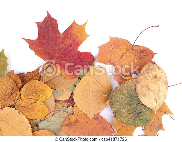 autumn leaves on a white background - csp41871726