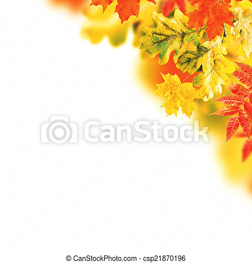 Autumn leaves on a white background - csp21870196