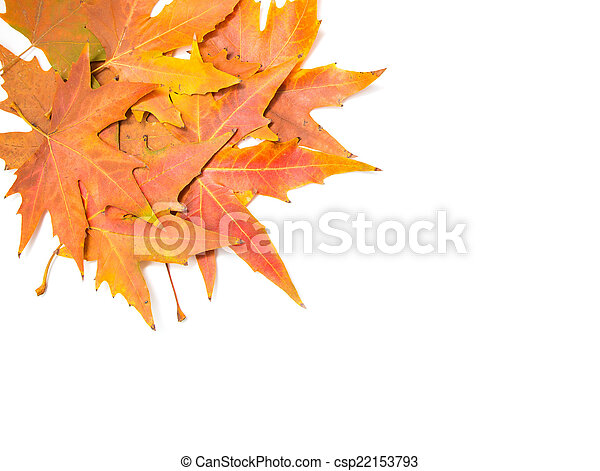 autumn leaves on a white background - csp22153793
