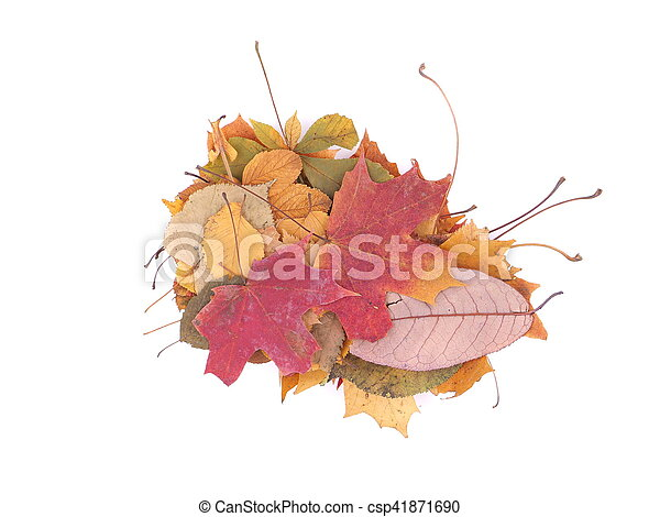 autumn leaves on a white background - csp41871690