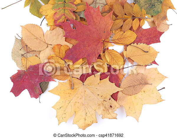 autumn leaves on a white background - csp41871692