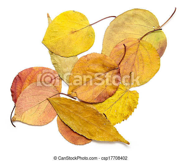 autumn leaves on a white background - csp17708402