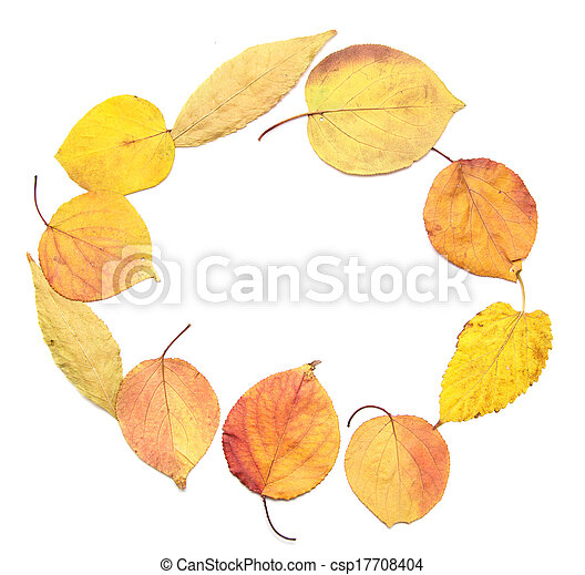 autumn leaves on a white background - csp17708404