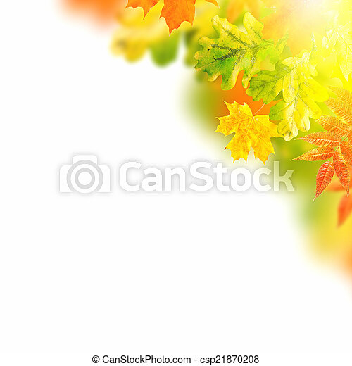 Autumn leaves on a white background - csp21870208
