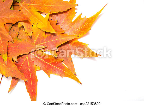 autumn leaves on a white background - csp22153800