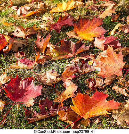autumn leaves on meadow - csp23799141