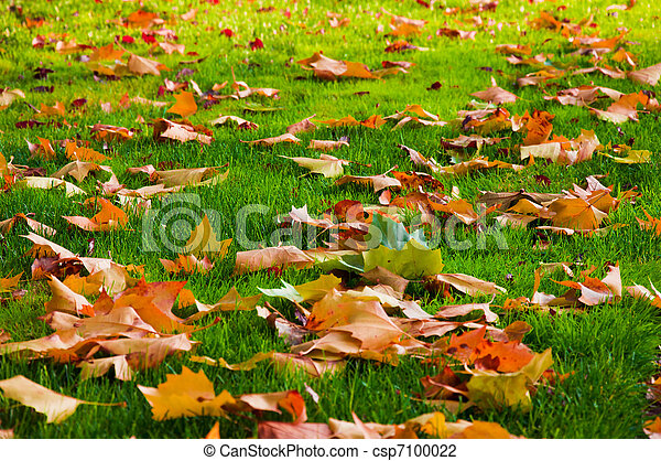 Autumn leaves on the green grass. - csp7100022