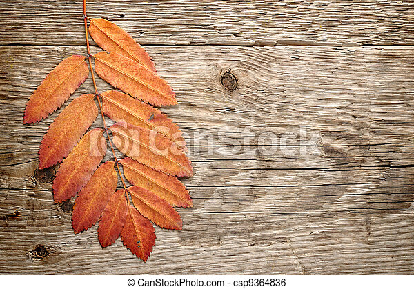 Autumn leaves on wood background - csp9364836