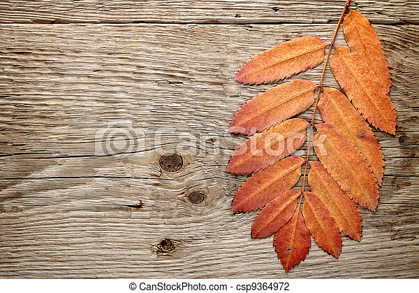 Autumn leaves on wood background - csp9364972