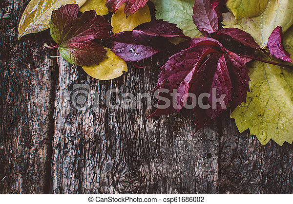 autumn leaves on wooden background - csp61686002