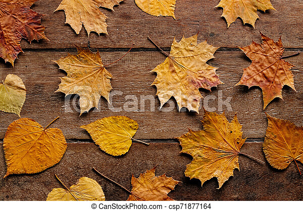 Autumn leaves on wooden background with copy space. Wallpaper for September 1. - csp71877164