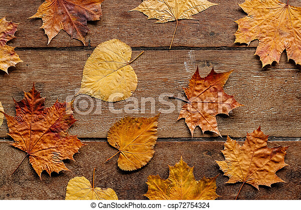 Autumn leaves on wooden background with copy space. Wallpaper for September 1. - csp72754324