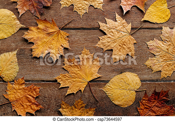 Autumn leaves on wooden background with copy space. Wallpaper for September 1. - csp73644597