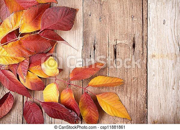Autumn leaves on wooden plank - csp11881861