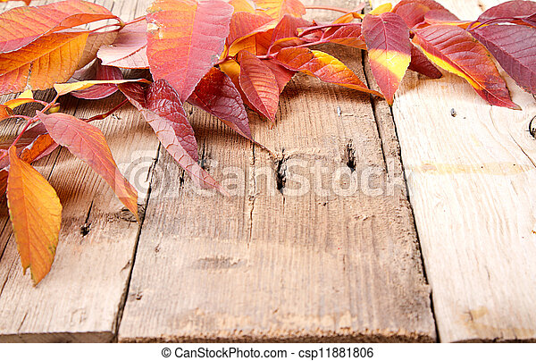 Autumn leaves on wooden plank - csp11881806