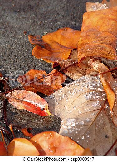 Autumn leaves - csp0008347