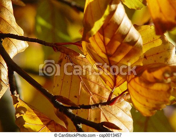 autumn leaves - csp0013457