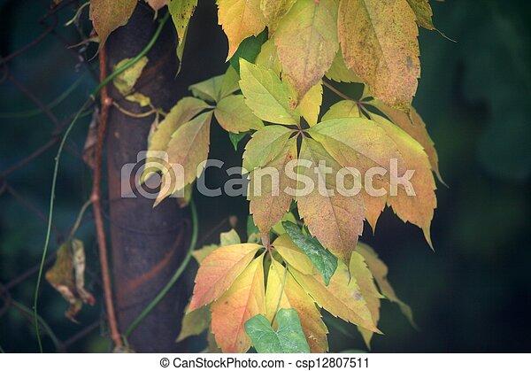 Autumn leaves - csp12807511