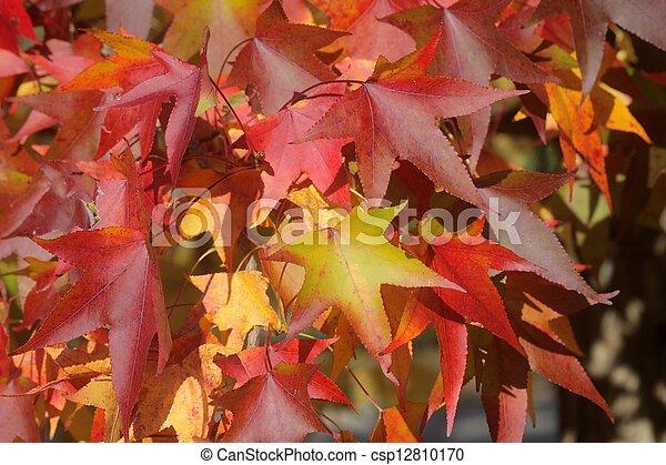 Autumn leaves - csp12810170