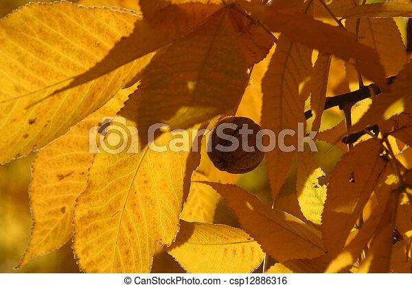 Autumn leaves - csp12886316