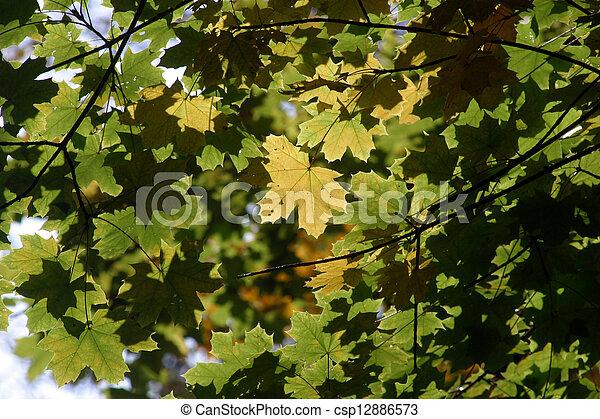 Autumn leaves - csp12886573