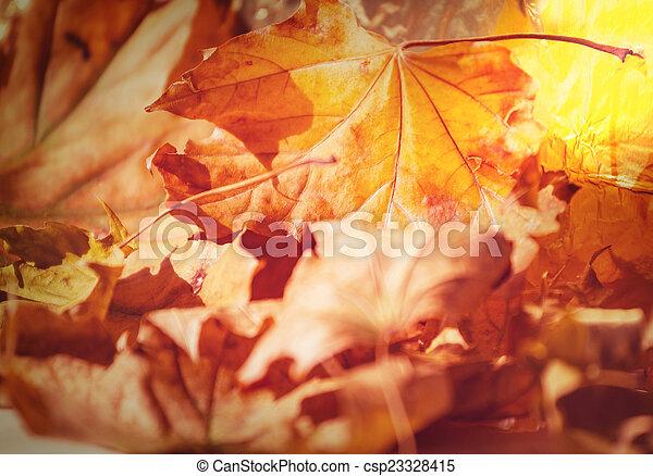 Autumn leaves - csp23328415