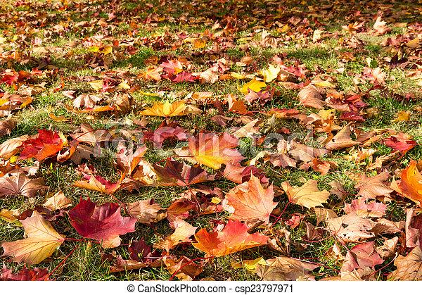 autumn leaves - csp23797971