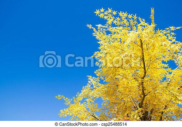 Autumn leaves. - csp25488514