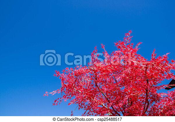 Autumn leaves. - csp25488517