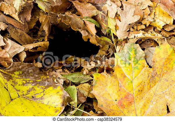 Autumn leaves - csp38324579