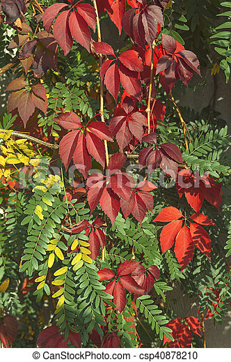 Autumn leaves - csp40878210