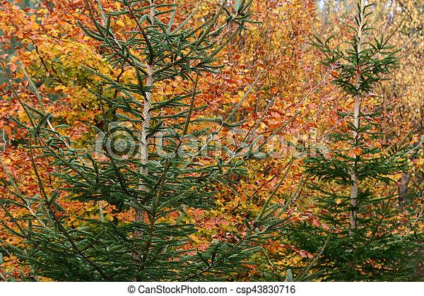 autumn leaves - csp43830716