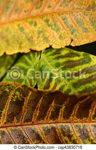 autumn leaves - csp43830718